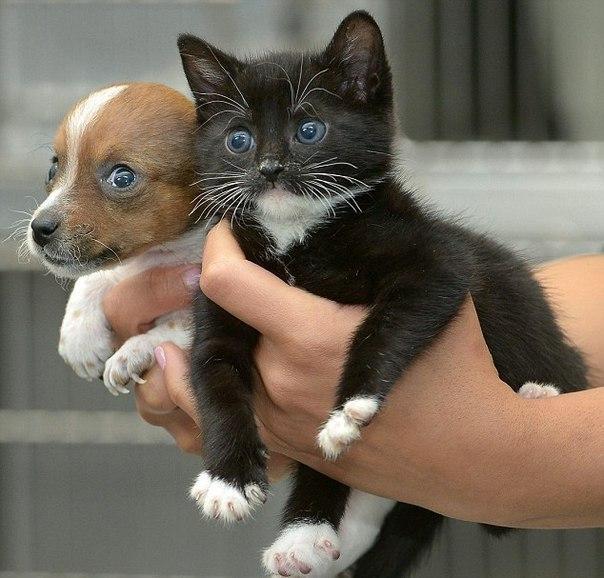 Два малыша, котенок и щенок, оба женского пола, подружились в английском приюте для животных Battersea Cats and Dogs Home и сейчас считают друг друга родственниками