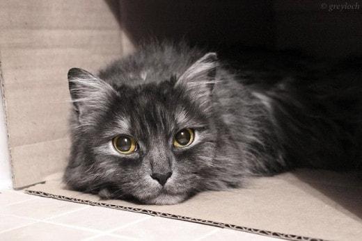 Исследование: почему коты так любят коробки