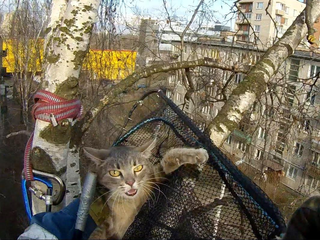 На Ключевой спасли кошку, просидевшую на дереве три дня