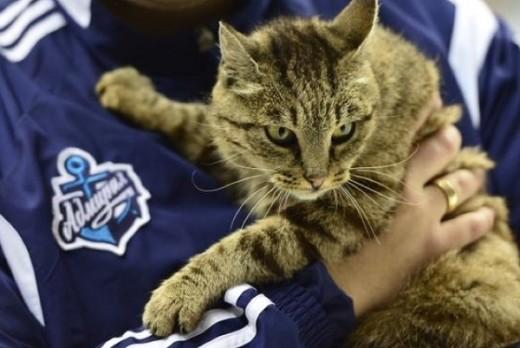 Кошка Матроска из Владивостока станет звездой телешоу