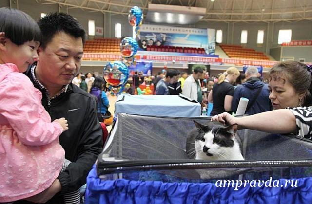 В Хэйхэ откроют филиал благовещенского кошачьего клуба