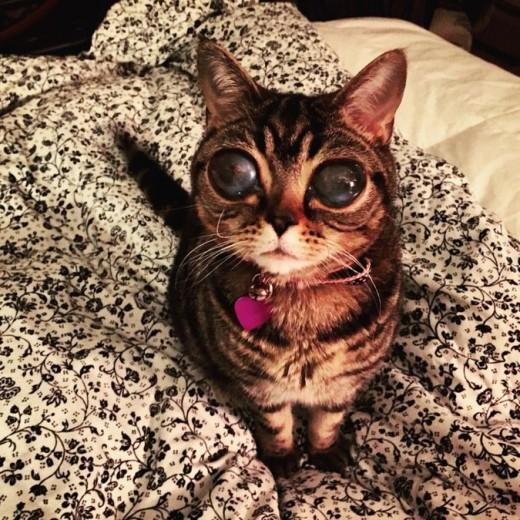 Кошка-инопланетянин из Великобритании покорила «Инстаграм»