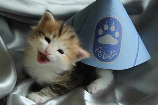 Стражи порядка финского города Тампере зачислили к себе в «сотрудники» кошку