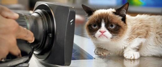 В Нью-Йорке пройдет выставка котиков из Интернета