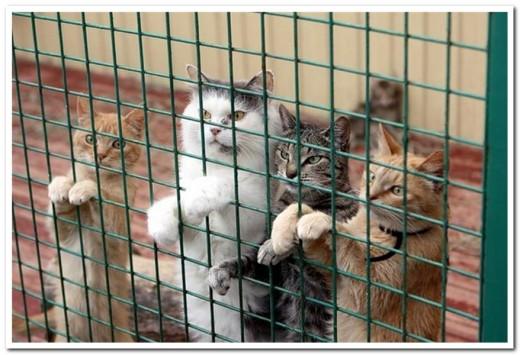 В Перми пенсионерка завещала деньги кошкам