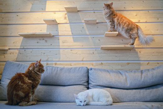 Депутаты хотят ограничить количество кошек и собак в квартирах россиян