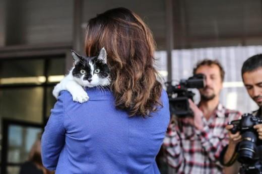 14-летний кот Ништяк вошел в историю НГУ