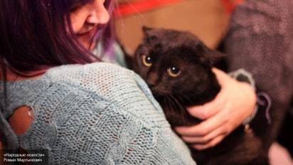 Хоть котика заберите: должник предложил банку арестовать животное в счет погашения долга
