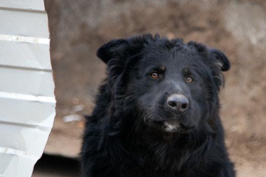 Комитет по АПК Заксобрания Нижегородской области одобрил законопроект о безнадзорных животных на территории региона