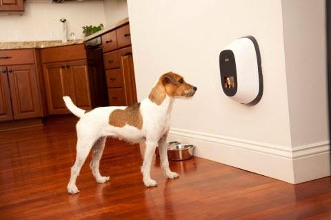 В Интернете собирают деньги на смартфон для собак и кошек