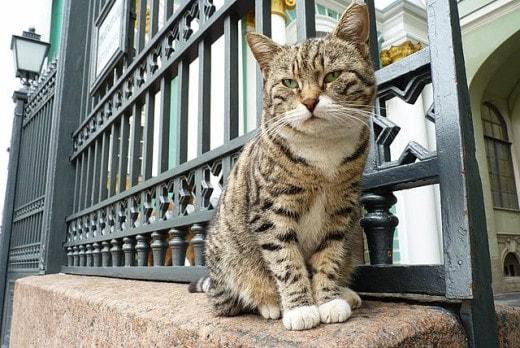 Эрмитажные коты отмечают 270 лет музейной службе