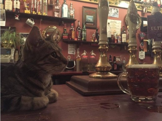 В Англии вслед за котокафе открыли кошачий паб