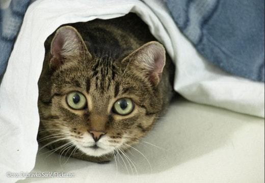 Калининградцам хотят запретить иметь больше двух кошек дома