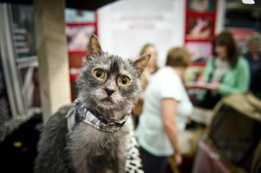 «Кошки-оборотни» стали героями СМИ и интернета