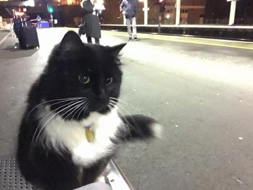 Кошка-контролер работает на вокзале в Британии