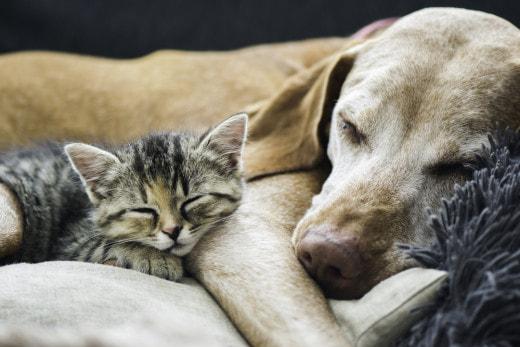 Ученые выяснили, кто больше любит своих хозяев: кошки или собаки