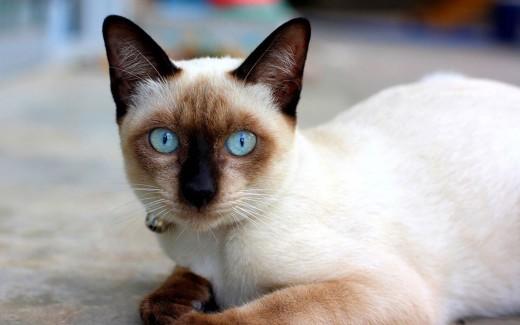 В Новой Зеландии кошка похитила 60 предметов мужского белья