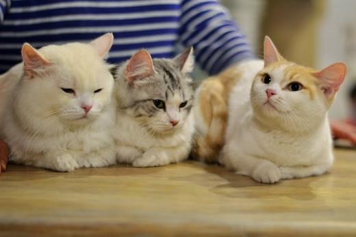 Кошек из «котокафе» могут выселить в отдельное помещение