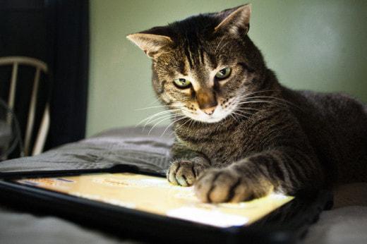 """Шведские ученые решили """"расшифровать"""" язык кошек"""