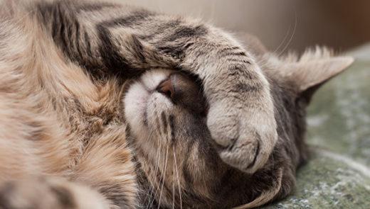 В США домашний кот взял в заложники супружескую пару