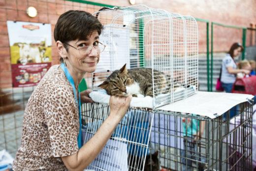 Помочь бездомным кошкам и собакам можно будет на выставке в Химках