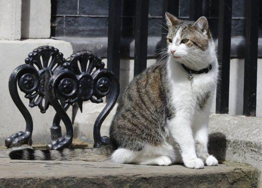Кто будет платить за главного кота Даунинг-стрит