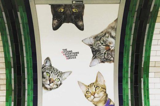 Британские активисты выкупили рекламу в метро и заменили ее кошками