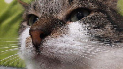 Сбежавший из музея эрмитажный кот Федор нашелся в компании щенка