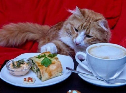 """Питомцам """"Республики кошек"""" подготовили новогоднее меню"""