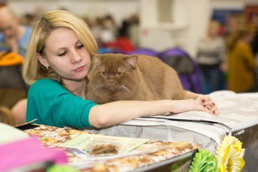 Вы воочию увидите представителей различных, в том числе редких, пород кошек, познакомитесь с различными системами судейства, пообщаетесь с заводчиками и представителями клубов.