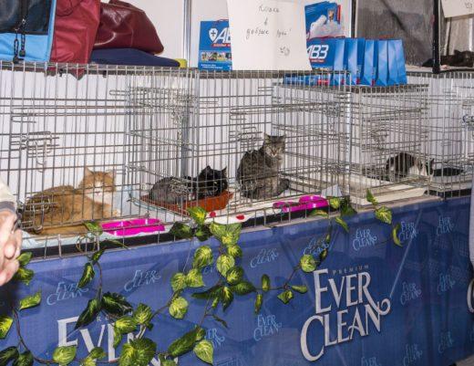В мэрии Кэтсбурга уверены: у каждой кошки должен быть свой дом! На выставке будут работать стенды приютов, где можно будет взять в свою семью «беспризорника» или просто оказать небольшую благотворительную помощь.