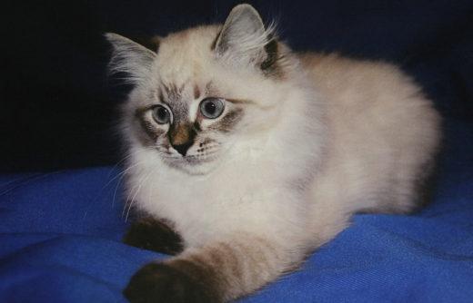 Тарья Халонен привезла Медведеву фото кошки, которую он подарил ей четыре года назад