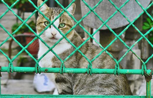 Московским бездомных животным найдут хозяев