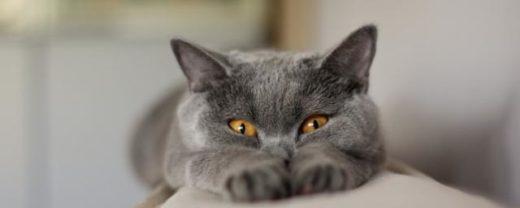 Ученые: Кошки не вредят психическому здоровью хозяев