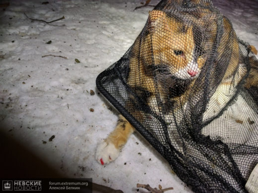 Спасатели сняли с дерева кошку с алым маникюром