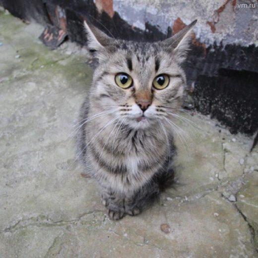 Настоящие британские мужчины предпочитают… котиков