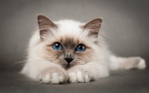 Ученые: Мурчание котов продлевает жизнь человека