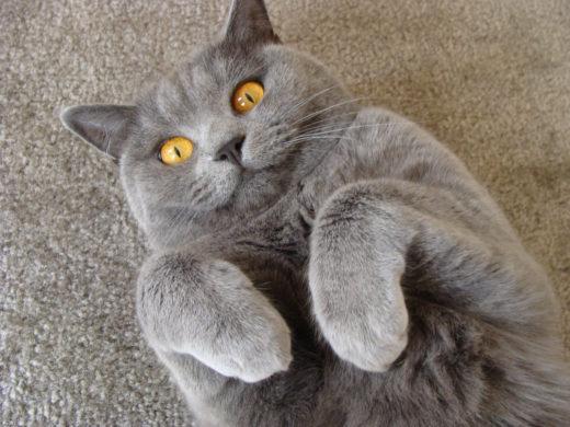 Ученые объяснили, почему кошкам нравится поглаживания по голове