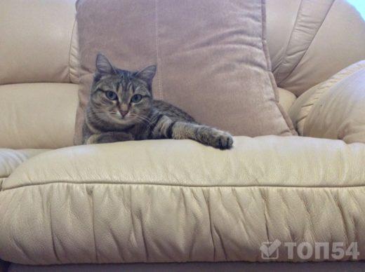 Россия обошла Украину и США по числу любителей кошек