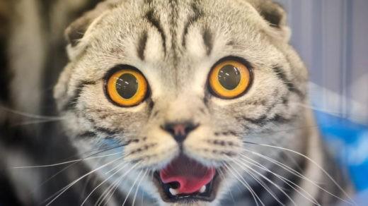 Ученые наконец-то смогли расшифровать мимику кошек