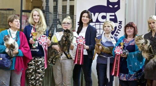 Победителями «Музыки осени» в Твери стала кошка из столицы и местный кот