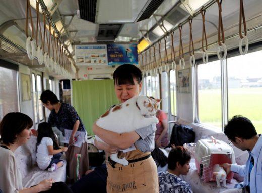 По Японии проехал поезд, в котором можно было поиграть с кошками во время поездки