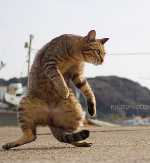 """""""Кийя!"""" Фотограф снимает кошек, которые занимаются карате"""