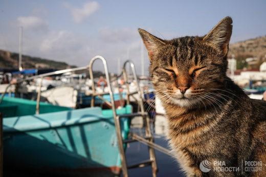 Кошки предотвращают астму у детей, выяснили ученые