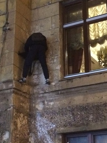 В Петербурге цинично ограбили кота Елисея