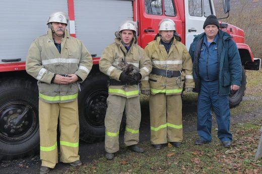 Смоленские пожарные спасли кота, застрявшего на дереве возле детсада