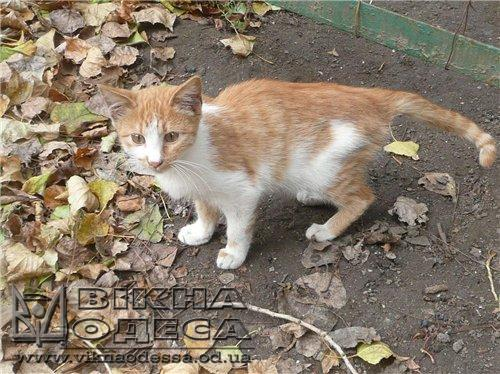 Одесский горсовет поддержал решение о защите бездомных котов