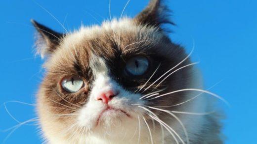 Хозяйка кошки-мема Grumpy Cat отсудила $710 тыс. по делу о правах