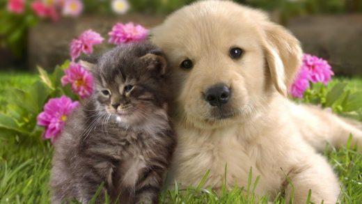 Ученые рассказали о вреде сырого мяса для собак и кошек