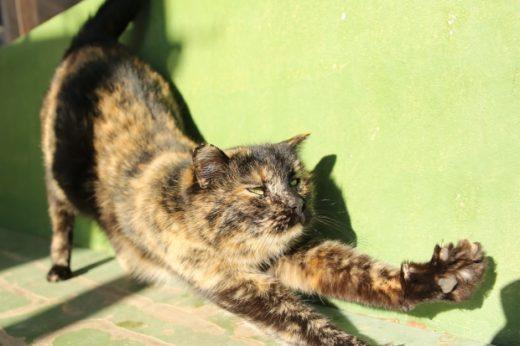 Волгоградцы обсуждают суровую кошку, сидящую в продуктовом магазине